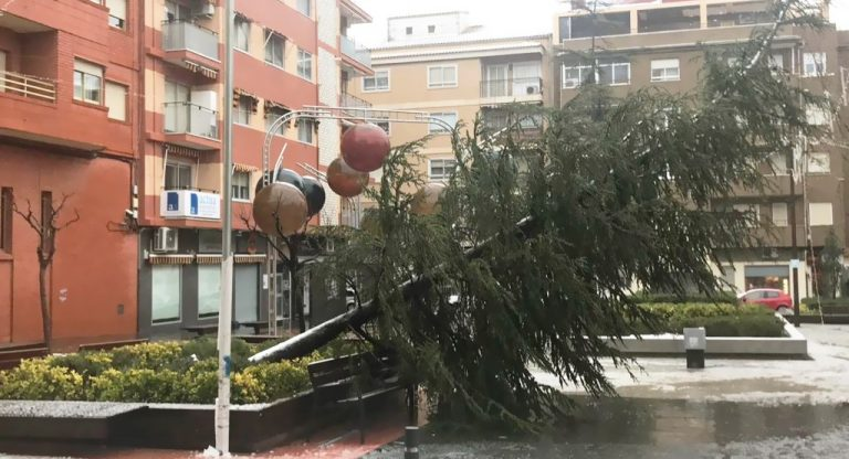 El PSOE de Ibi solicita el replantado de árboles en todo el casco urbano